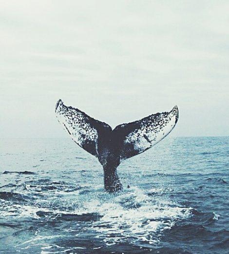 Road trip : Le voyage aux baleines