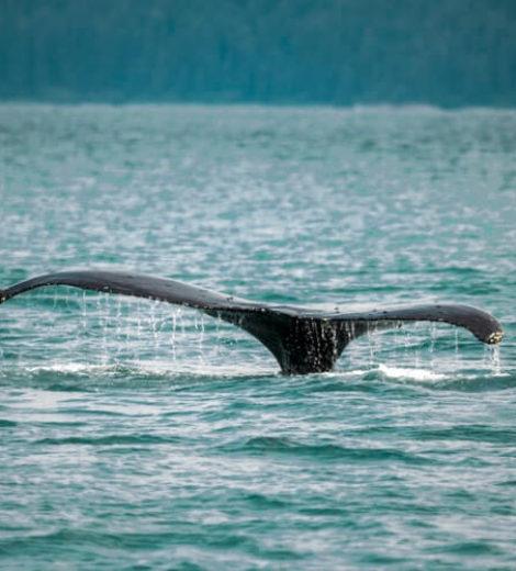 Road trip au Canada : Le voyage aux baleines de Tadoussac