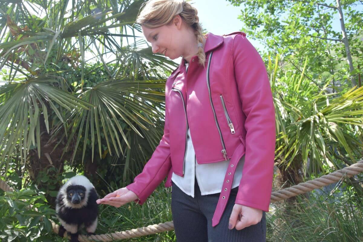 Pairi Daiza : La folie des singes et des lémuriens !- La revue de Kathleen - Blog Lifestyle et voyage à Parishleen - blog lifestyle