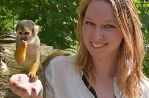 Pairi Daiza : La folie des singes et des lémuriens !