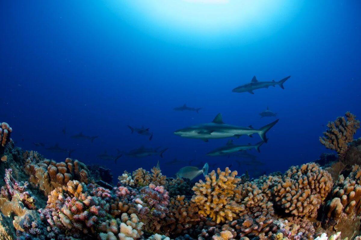 baptême de plongée-Tahiti-Moorea-Polynésie française-TOP DIVE-La revue de Kathleen-Blog-Lifestyle-voyage-Paris