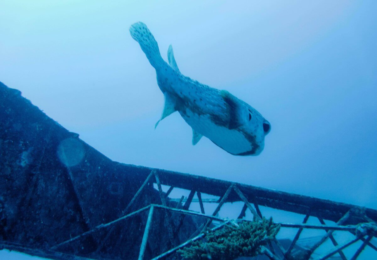 Niveau de plongée-Tahiti-Polynésie Française-La revue de Kathleen-Blog-Lifestyle-voyage-Paris