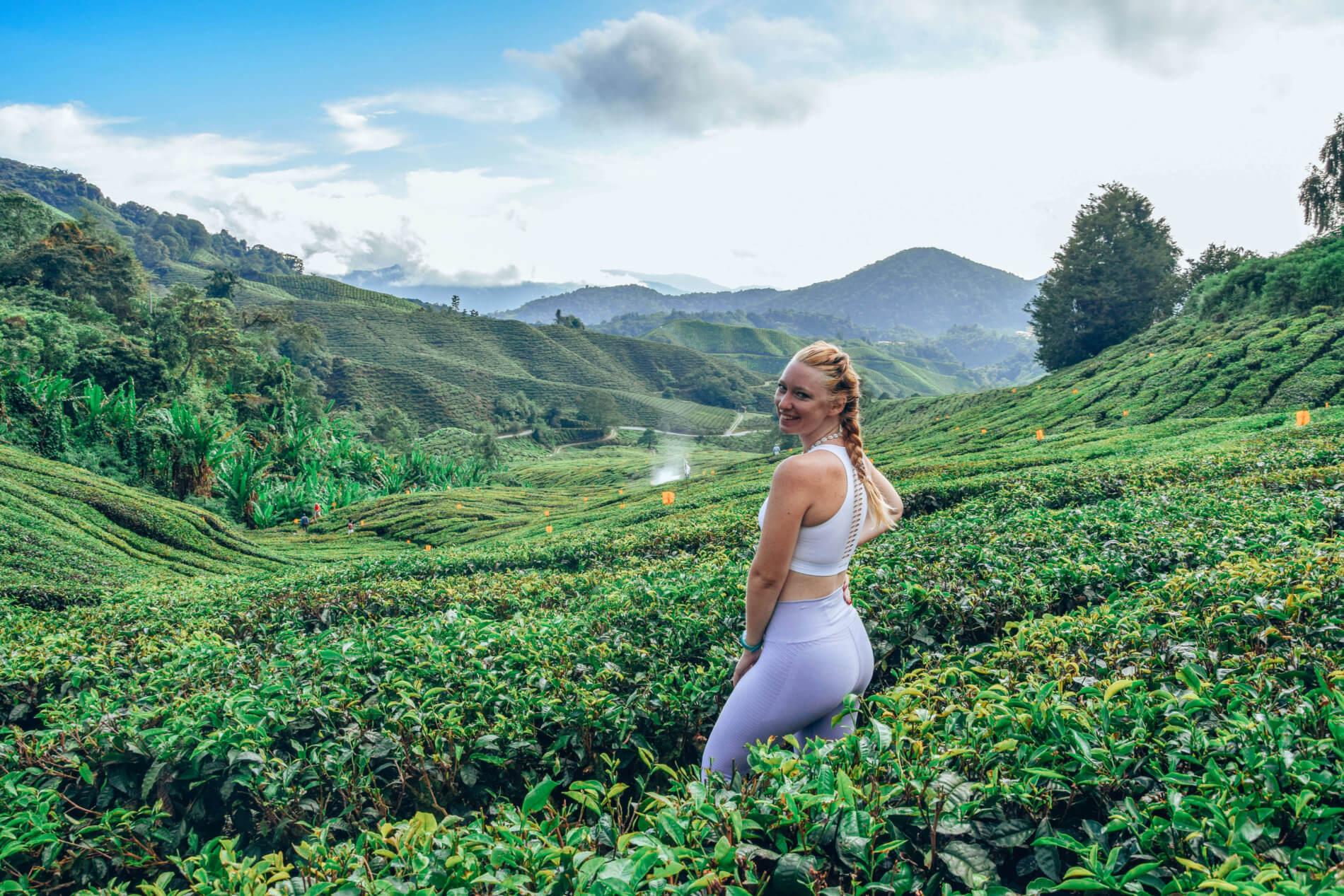 Cameron Highland-Malaisie-La revue de Kathleen-Blog-Lifestyle-voyage-Paris