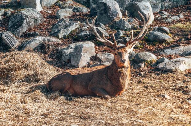 Parc Oméga – A la rencontre des orignaux