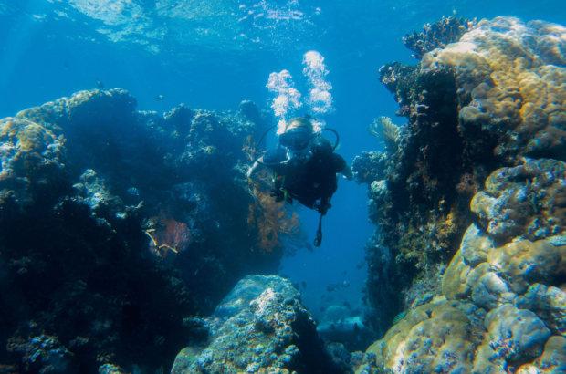Le jardin de corail à Amed en plongée sous-marine – Buddha Diving